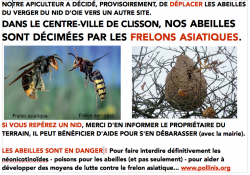 Alerte Frelon asiatique